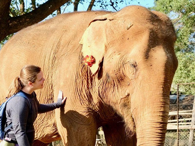 Save the Elephants - Elephant Liz Thailand